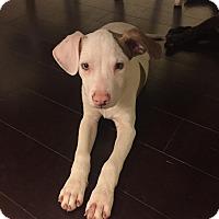 Adopt A Pet :: Mick - Houston, TX