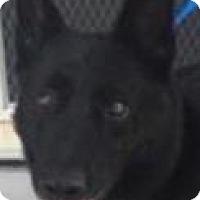 Adopt A Pet :: Sax - Leesville, SC