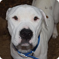 Adopt A Pet :: BENTLEY - Memphis, TN