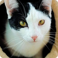 Adopt A Pet :: Ramses  Male - knoxville, TN