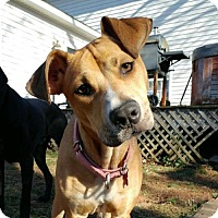 Adopt A Pet :: Lynn - Potomac, MD