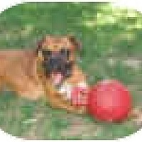Adopt A Pet :: HAUS - Sunderland, MA