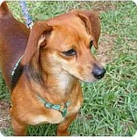 Adopt A Pet :: Peanut - E Windsor, CT