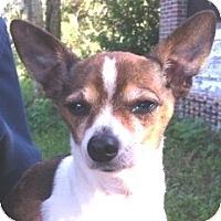 Adopt A Pet :: Melvin - Orlando, FL