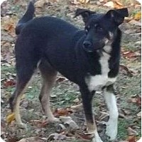 Adopt A Pet :: Shellie - Allentown, PA