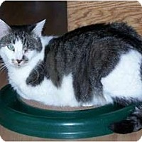 Adopt A Pet :: Auggie - Prescott, AZ