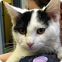 Adopt A Pet :: Twiggy - Richboro, PA