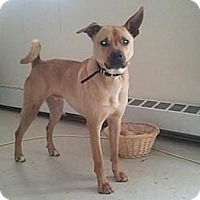 Adopt A Pet :: Radar - Hamilton, ON