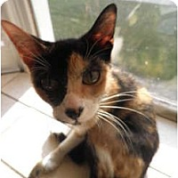 Adopt A Pet :: Lenna - Warren, MI