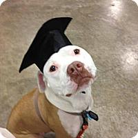 Adopt A Pet :: Cassius - Laingsburg, MI
