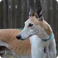 Adopt A Pet :: SK Runaway