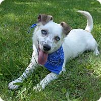 Adopt A Pet :: Sinatra - Mocksville, NC