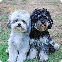 Adopt A Pet :: LAVERNE & SHIRLEY - Los Angeles, CA