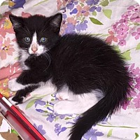Adopt A Pet :: Mickey and Minnie - Putnam, CT