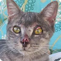 Adopt A Pet :: Buddy (Julia's Foster) - Hudson, NY