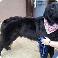 Adopt A Pet :: Magic - Barrington, RI