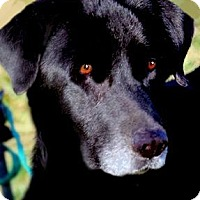 Adopt A Pet :: MISS CHICA(WHAT A STORY!!! - Wakefield, RI
