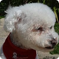 Adopt A Pet :: Reagan - La Costa, CA