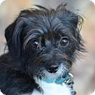 Adopt A Pet :: Harriett McPup