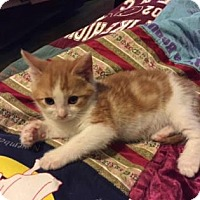 Adopt A Pet :: Lionel - New York, NY