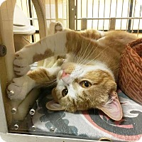 Adopt A Pet :: Sassy - Arlington/Ft Worth, TX
