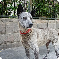 Adopt A Pet :: Jordan - Sunnyvale, CA
