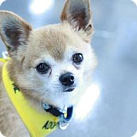 Adopt A Pet :: Thurston - Romeoville, IL