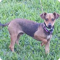 Adopt A Pet :: Wego - Lindale, TX