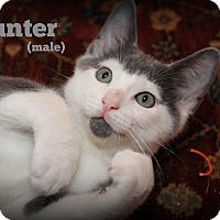 Adopt A Pet :: Hunter - Glen Mills, PA