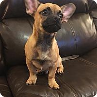 Adopt A Pet :: Charlie - Rockford, IL