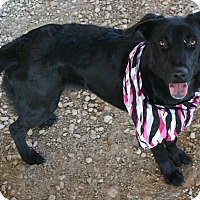 Adopt A Pet :: Saylor - Pilot Point, TX