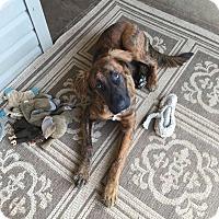 Adopt A Pet :: Ethel - New Oxford, PA