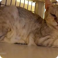 Adopt A Pet :: Sandie - Tucson, AZ