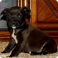 Adopt A Pet :: JAZZY - PRINCETON, KY
