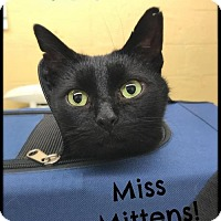 Adopt A Pet :: Miss Mittens - Akron, OH