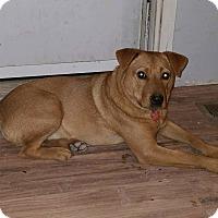 Adopt A Pet :: Dash - Minneapolis, MN