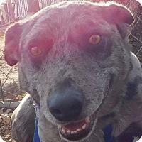 Adopt A Pet :: Baden - MINNEAPOLIS, KS