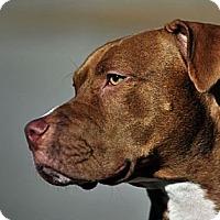 Adopt A Pet :: Wilson - Nashville, TN