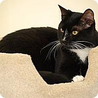 Adopt A Pet :: Dash - Bensalem, PA