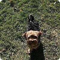 Adopt A Pet :: Solomon - Ogden, UT