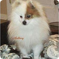 Adopt A Pet :: Anthony - South Amboy, NJ