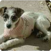 Adopt A Pet :: Carly - Phoenix, AZ