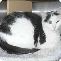 Adopt A Pet :: Saul - Colmar, PA