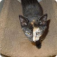 Adopt A Pet :: Francine - Medina, OH