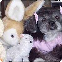 Adopt A Pet :: Cassidy - Mays Landing, NJ