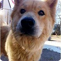 Adopt A Pet :: Paris - Scottsdale, AZ