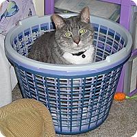 Adopt A Pet :: Thomas - Springfield, PA