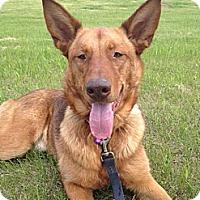 Adopt A Pet :: Penny Lane - Saskatoon, SK