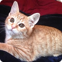 Adopt A Pet :: Hamster - North Highlands, CA