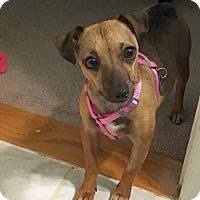 Adopt A Pet :: Kisa - Knoxville, TN